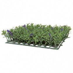 Lavendelplade