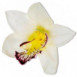 Orkidé blomsterhoved