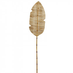 Tørret vandhyacint blad m stilk