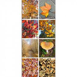 Banner Harvest (Efterårs-banner)