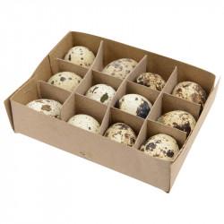 Vagtelæg i kasse, 12 stk, ægte skaller