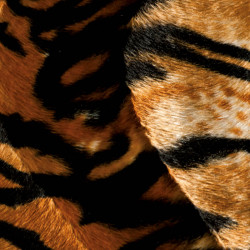 Tiger velour