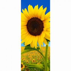 Banner Sunfield