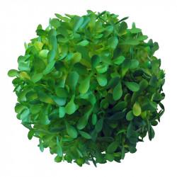 Buksbom bold Ø 12cm, 6 mdr UV, kunstig plante