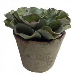 Sukkulent, echeveria i krukke, 14cm, kunstig plante