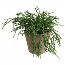 Mistelten Kaktus i antik krukke,tynde arme, kunstig plante