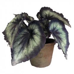 Kongebegonia i krukke Sort/Grøn 23cm, kunstig plante