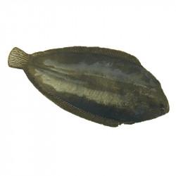 Fisk (Sjötunga/Rödspätta), konstgjort djur