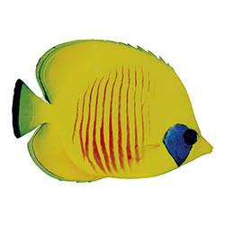 Tropisk fisk, platt med tryck på båda sidor