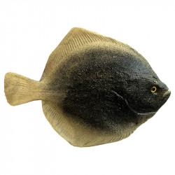 Flundra (fisk), konstgjorda djur
