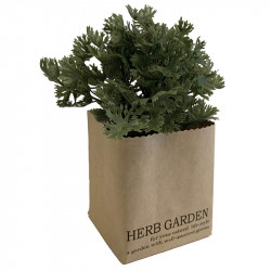 Persilja i papperslåda, 16cm, konstgjord växt