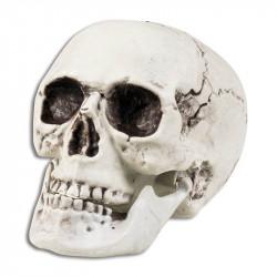 Kranie med rörlig käke