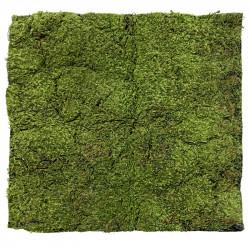 Mossplatta, 100x100cm, konstgjord planta