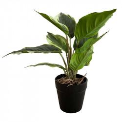 Syddracena växt, grön, 25cm, konstgjord växt