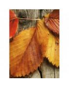 Find bannere med falmende farver til efteråret ⇒ Brondsholm.dk