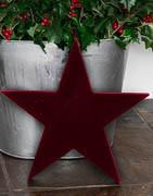 Stjerner | Unikt udvalg af julestjerner