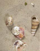 Sand og sten