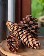 Dekorations- kogler, svampe og nødder