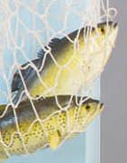 Kunstige fisk, skaldyr og isterninger i plastik ⇒ Køb online her!